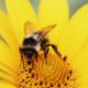 Specialization Is for Insects- Embracing a Growth Mindset